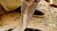 Célébrations Journées internationales : Et les serpents s'invitèrent dans la danse !