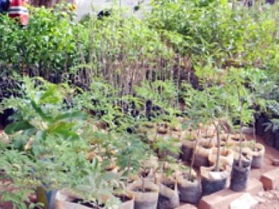 Campagne agricole : L'INERA propose ses semences améliorées