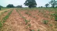 Situation sécuritaire dans la région du Nord : Plus de 3 000 ha  de terres agricoles abandonnées