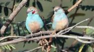 Protection des oiseaux : ICCO coopération veut porter un projet qui vole haut